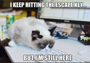 Grumpy cat - I keep hitting the Escape Key but I'm still here